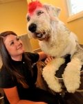 Katie�s new business has pooch pampering nailed